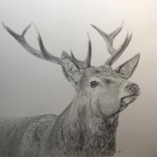 Carl Fitton - Learn To Draw 6 week course - Tue 22nd Jan 2018  - 7.00-9.00pm
